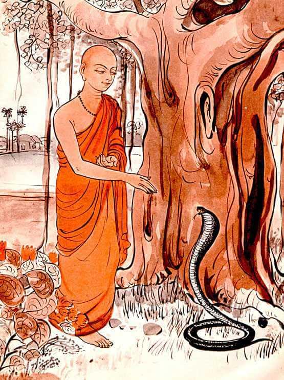 הנזיר והקוברה