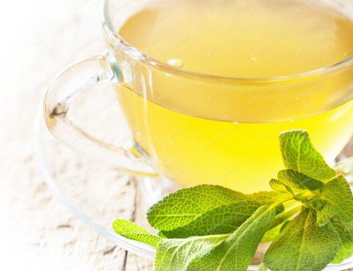 מרווה – צמח מרפא עתיק יומין