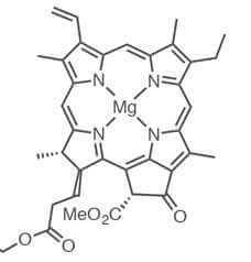 כלורופיל מולקולה
